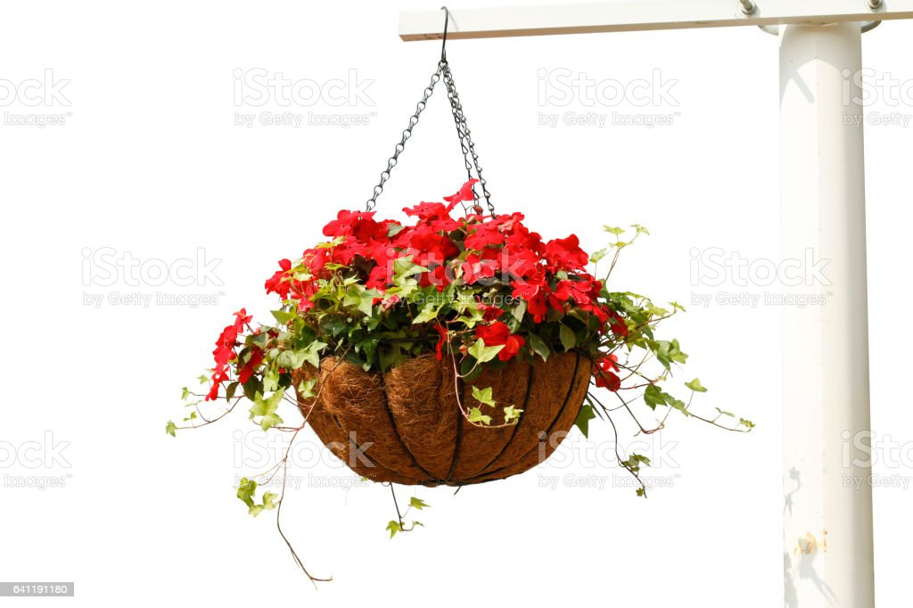 Hanging flowers isolated on white background – Foto