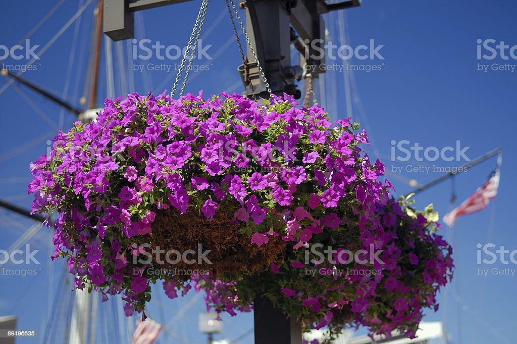 Wiszący kwiaty zbiór zdjęć royalty-free