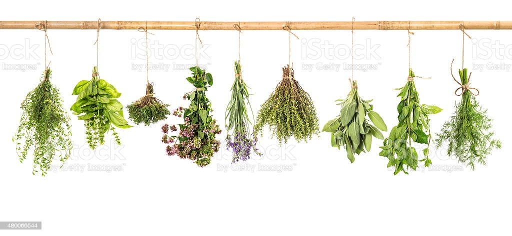 Hanging fresh herbs basil, sage, thyme, dill, mint, lavender stock photo