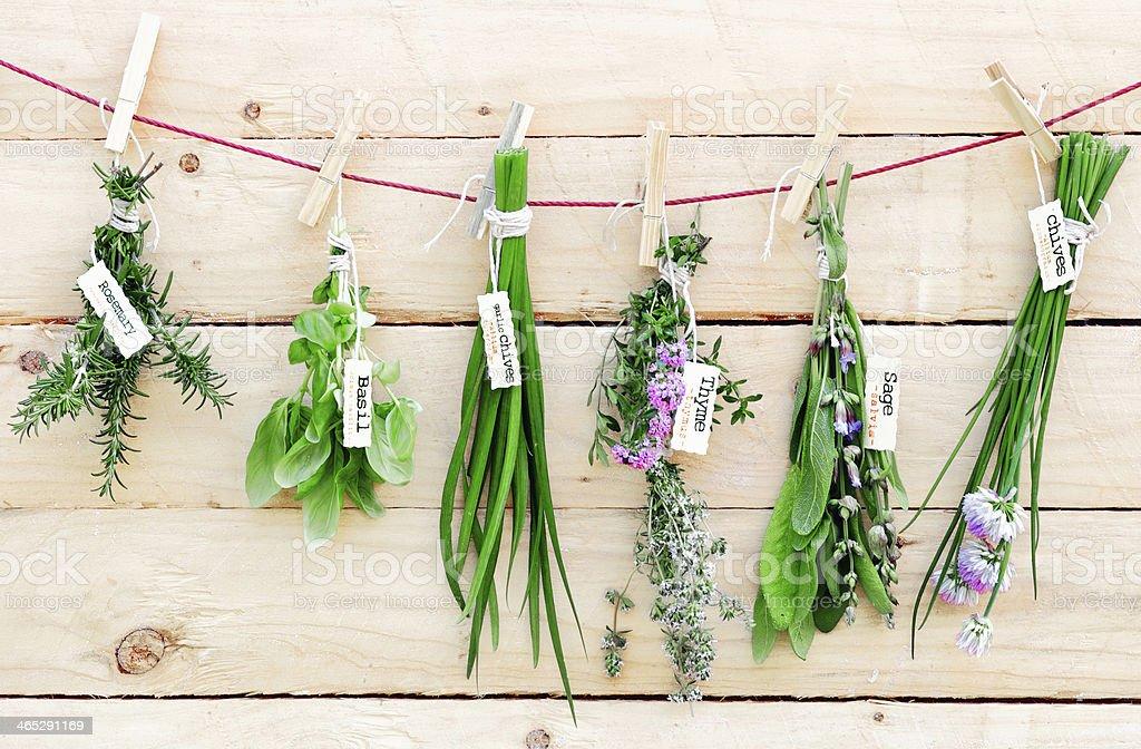 Hanging Herbs stock photo