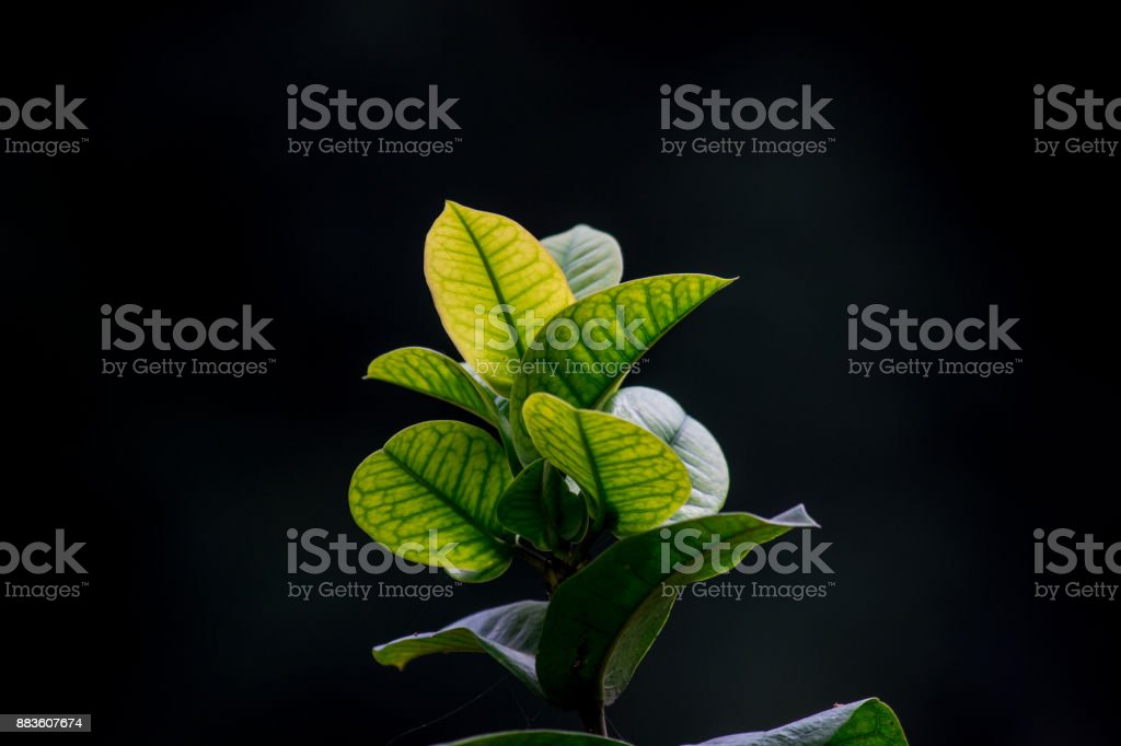 Hanging Leaves stock photo