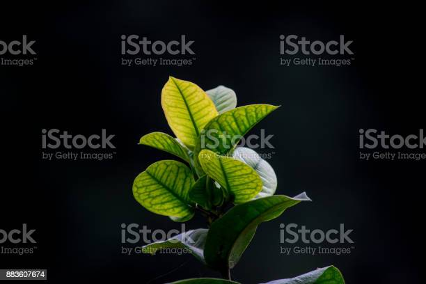 Photo of Hanging Leaves