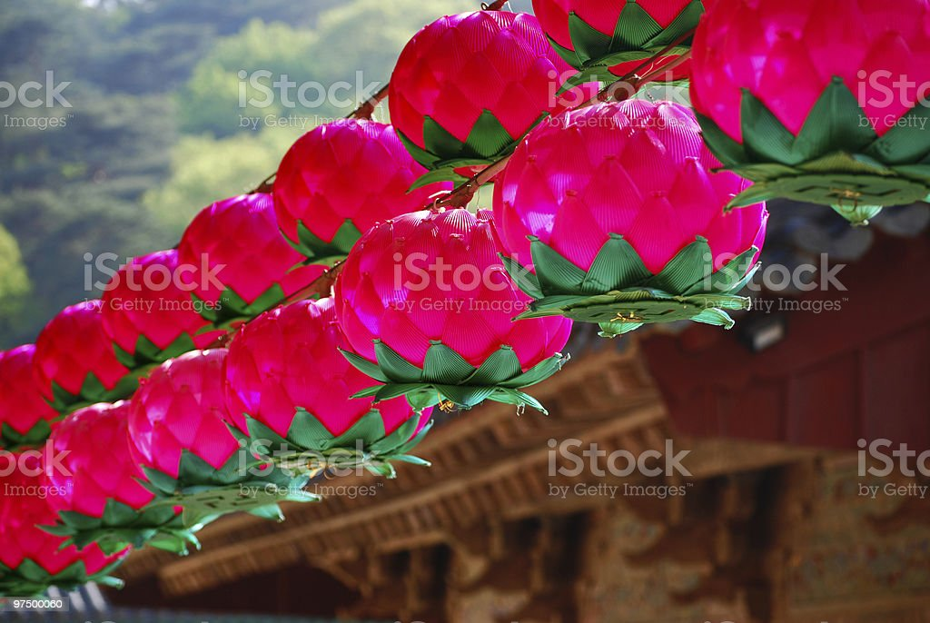 Hanging lotus lanterns for Buddha's Birthday in temple royalty-free stock photo