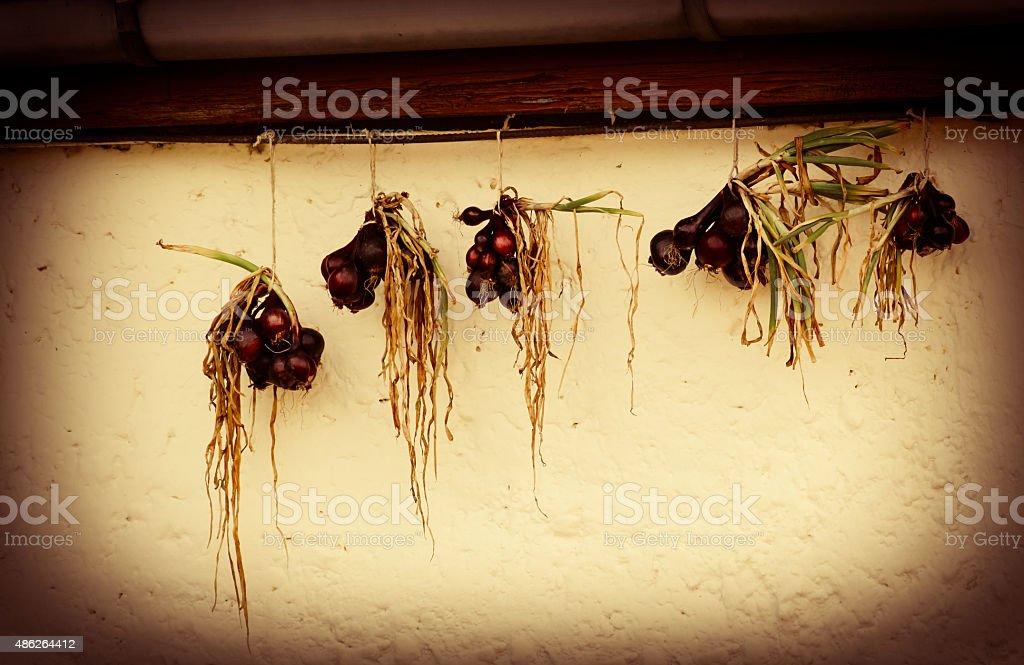 Hanging Onions stock photo