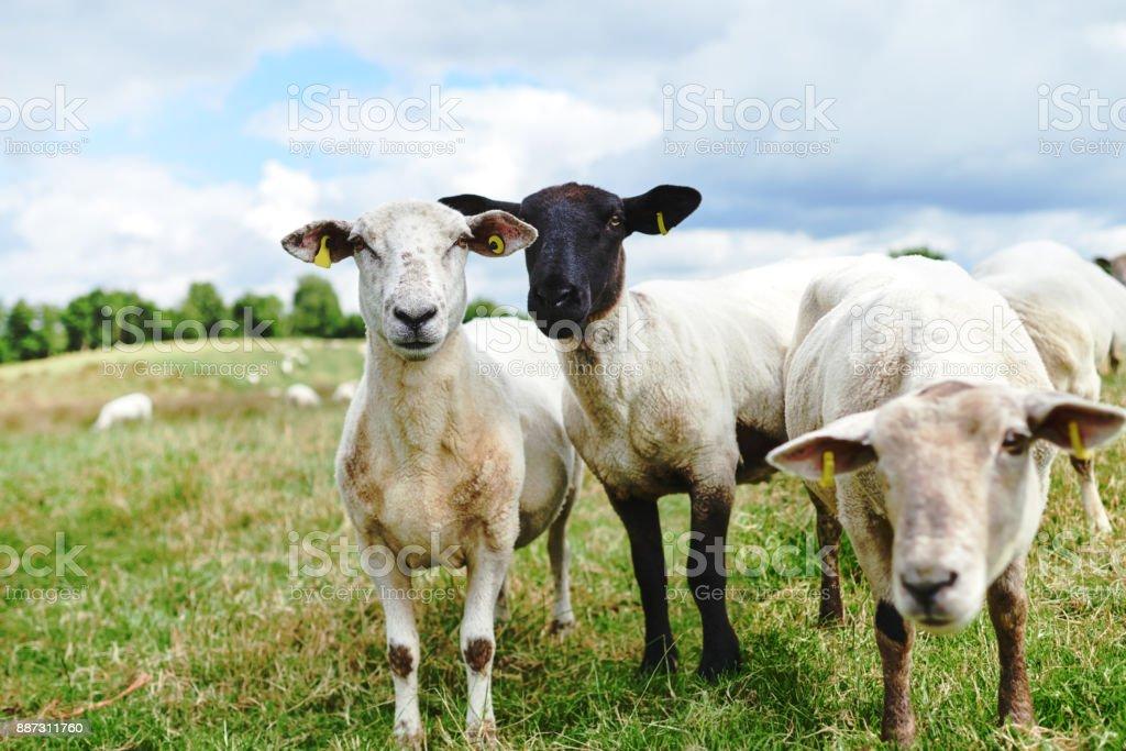 Sair com minha fazenda fam - foto de acervo