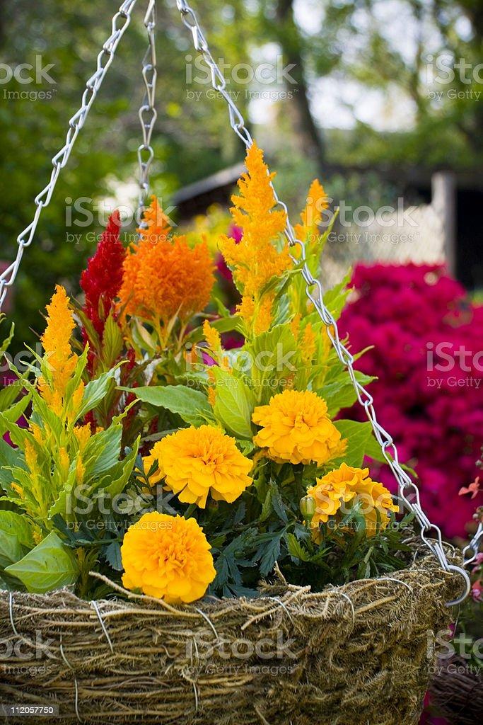 Hanging Planter royalty-free stock photo