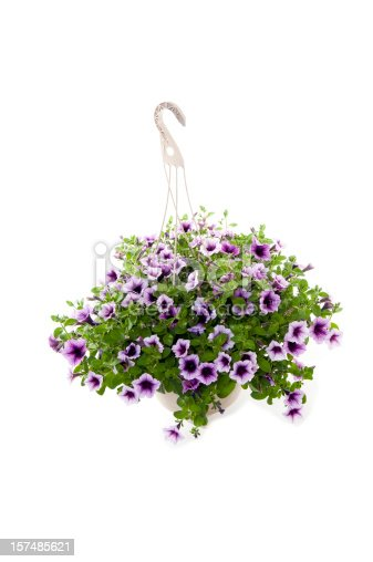 A large hanging basket of Petunias isolated on white.