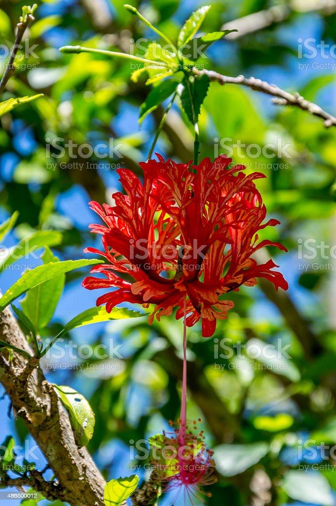 Hängende rote flower – Foto