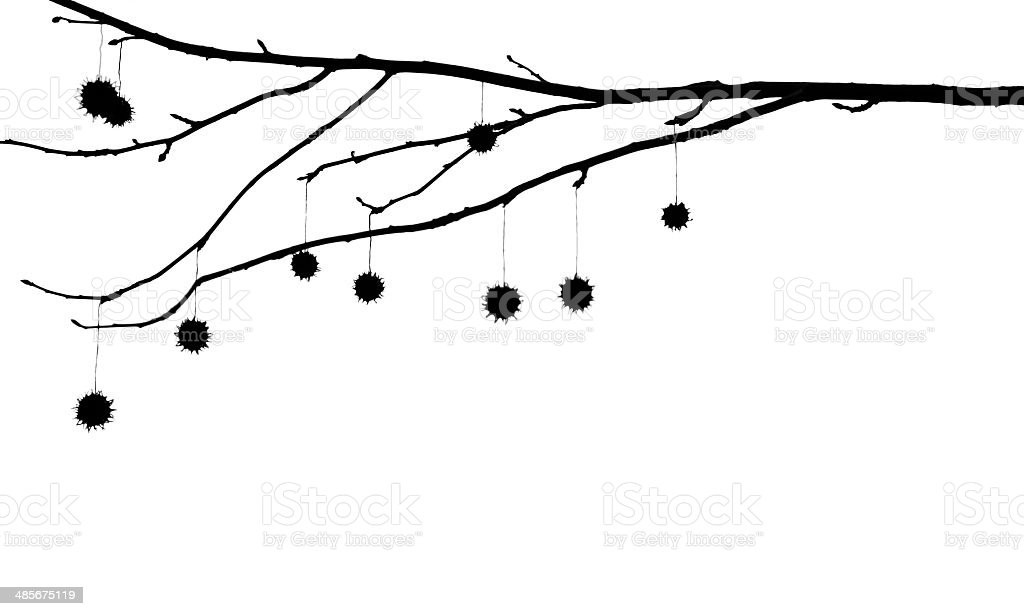 Hanging seed capsules and branches isolated on white stock photo