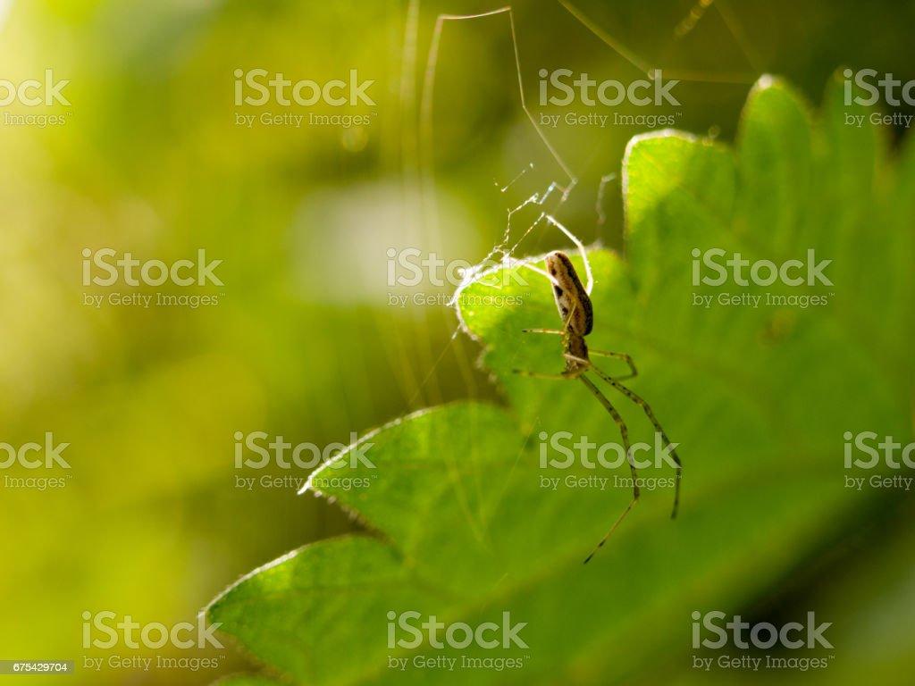araignée suspendue au printemps avec fond de feuille photo libre de droits