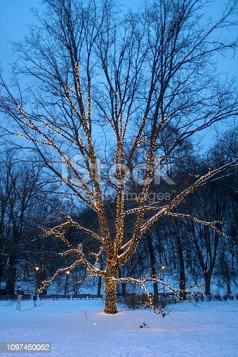 614958148 istock photo Hanging tree decorative holiday lights 1097450052