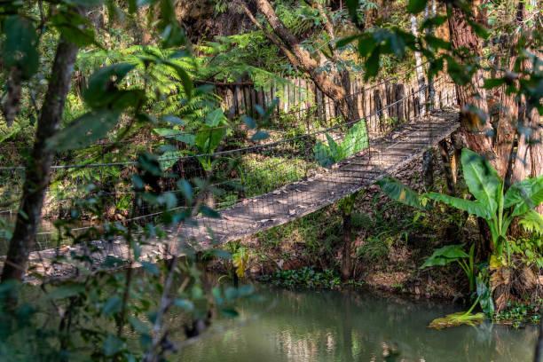 Hanging wooden bridge Madagascar jungle stock photo