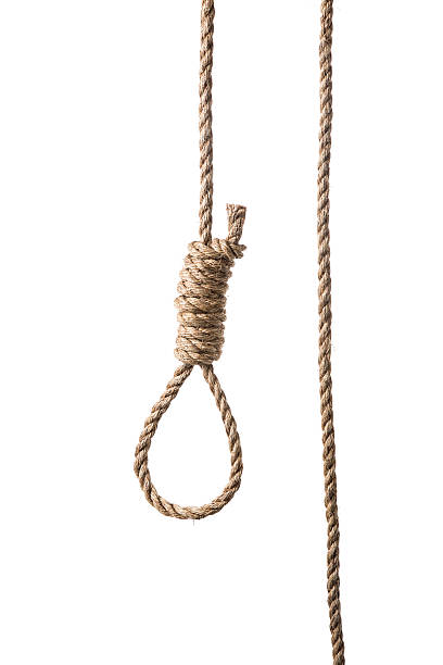 hangman's noose real frayed rope isolated on white - noose stock photos and pictures
