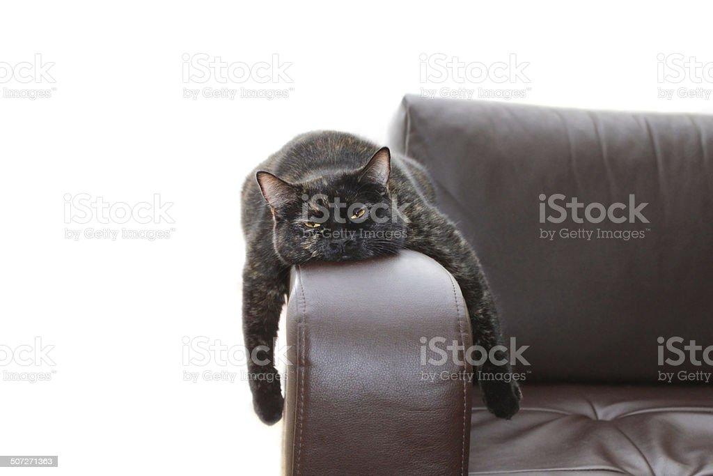 hangover cat stock photo
