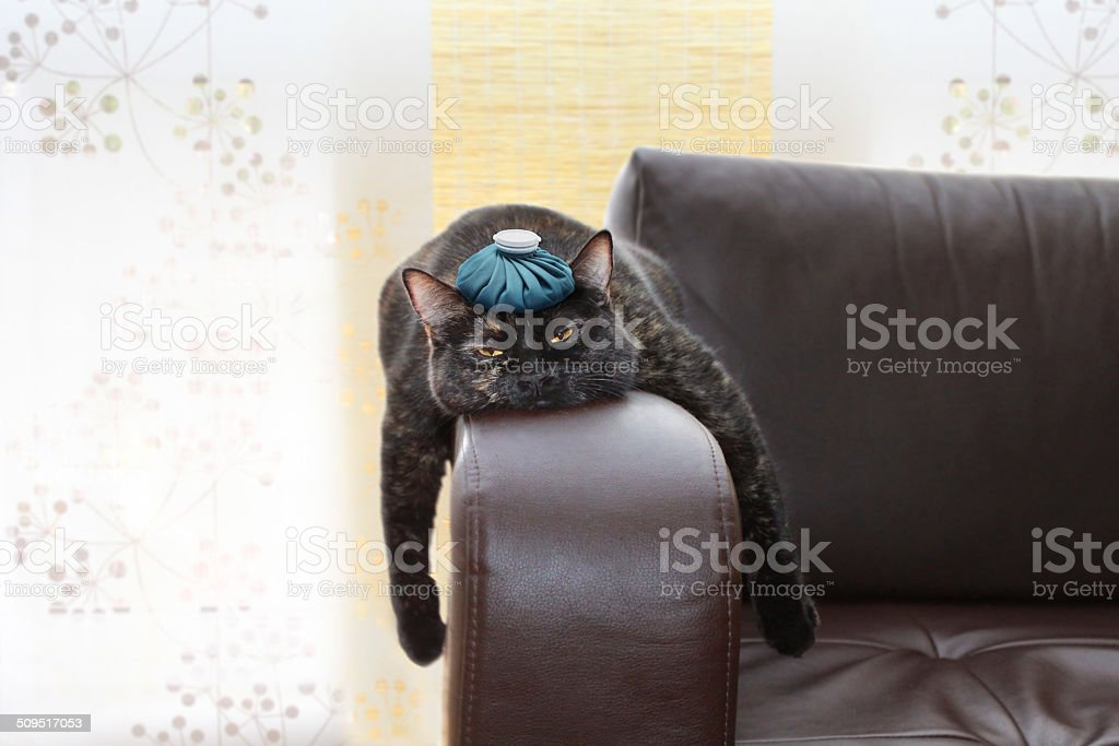 hangover stock photo