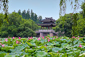 Summer view of West Lake scenic area, Hangzhou (China), with Lotus flowers