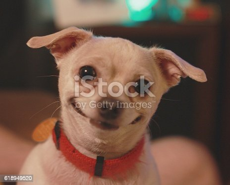 istock Happiest dog in the world 618949520