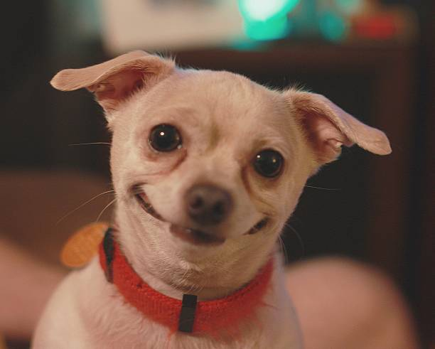 happiest dog in the world - humor stock photos and pictures