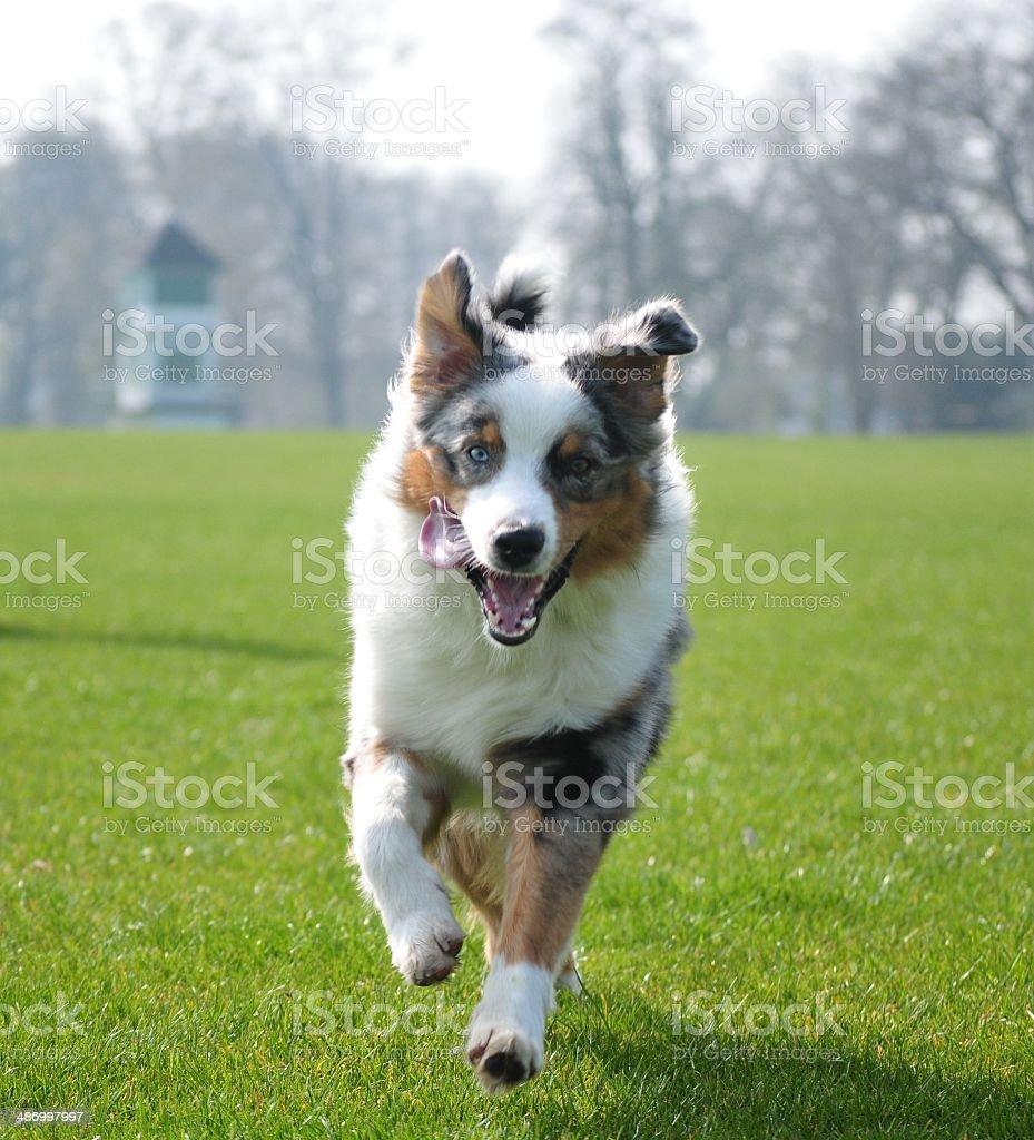 Happiest dog on earth! stock photo