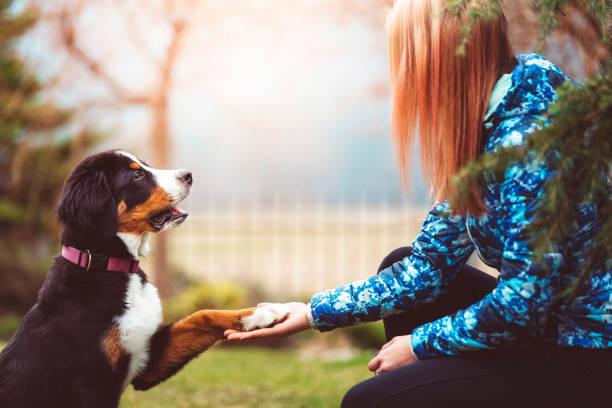 Happines is a warm puppy picture id912223590?b=1&k=6&m=912223590&s=612x612&w=0&h=f1q7 tegztjxolofsopvagdoceqwxj scbyyhscdizg=