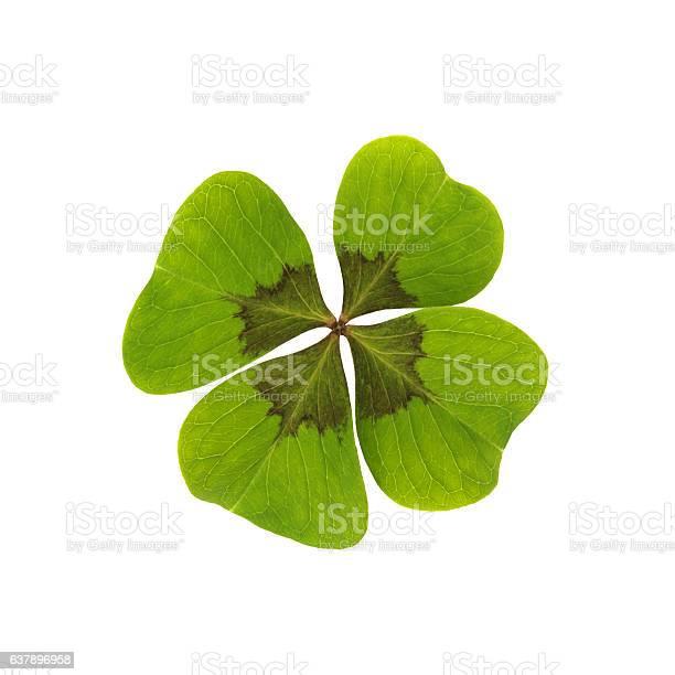 Happiness clover cutting path isolated picture id637896958?b=1&k=6&m=637896958&s=612x612&h=mfoocffcfjeq2ewzlazenv6ims0hgsmlbbhxyhxgzck=