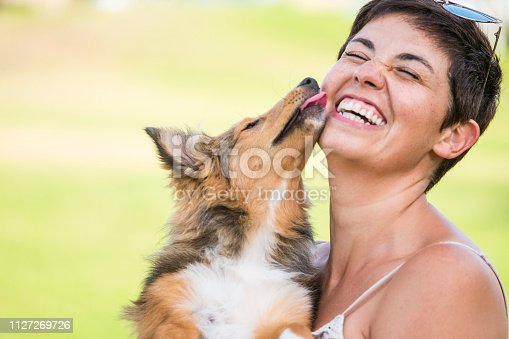 happiness concept with young beautiful laughing lady with short black hair and puppy dog shetland kissing her on the face with love and playful. friendship and together happy family alternative millennial