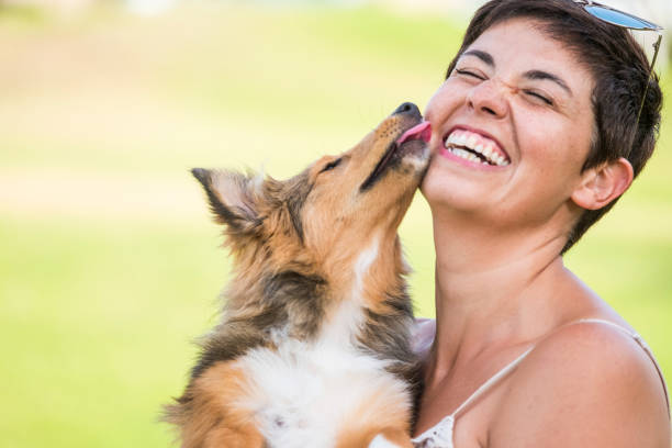 happiness concept with young beautiful laughing lady with short black hair and puppy dog shetland kissing her on the face with love and playful. friendship and together happy family alternative millennial happiness concept with young beautiful laughing lady with short black hair and puppy dog shetland kissing her on the face with love and playful. friendship and together happy family alternative millennial pecking stock pictures, royalty-free photos & images