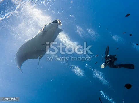 This stunning Manta Ray (Manta birostris) image was captured whilst scuba diving in the Andaman Sea, Krabi, Thailand.  A rare opportunity to see these magnificent creatures.  Oceanic Manta Rays are in the classification of Elasmobranch and are also commonly known as Giant Manta Ray, Oceanic Manta Ray, Pacific Manta Ray, Pelagic Manta Ray or Chevron Manta Ray.  They are gentle, pelagic, plankton feeders and have been classified as 'Vulnerable to Extinction' IUCN red list, due to being target hunted for their meat and gill rakers.  However also susceptible to being caught as by catch.  Although their numbers are declining at a rapid rate, they are not yet a protected species.  This image shows their natural behavior in the wild, as they visit the coral reef to use as a cleaning station, by allowing small fish to clean off their parasites. This is a perfect demonstration of a symbiotic relationship.  One unrecognisable, incidental scuba diver can be seen enjoying the wonders of Nature.