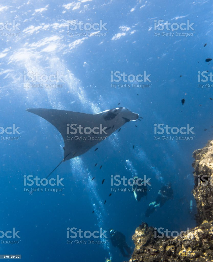 Happiness in Nature: People enjoying nature scuba diving with an Endangered Species Pelagic Oceanic Manta Ray (Manta birostris). The location is Hin Muang Archipelago, Krabi, Andaman Sea, Thailand. stock photo