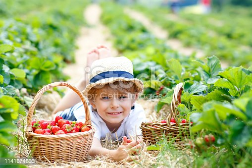 Happy adorable little kid boy picking and eating strawberries on organic berry bio farm in summer, on warm sunny day. Funny child having fun with helping. Strawberry plantation field, ripe red berries