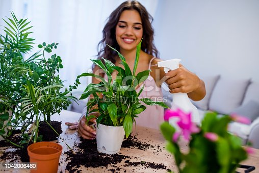 Women's hobby. Woman squirts and takes care of household plants and flowers. Water the house plant. Care for domestic flowers. Spray with water.  Woman watering the plant with spray