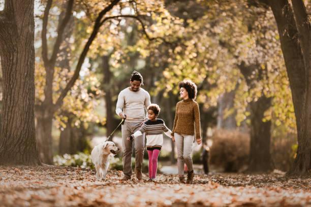 행복 한 아프리카계 미국인 가족은가을 산책을 위해 그들의 개를 복용. - 개과 뉴스 사진 이미지