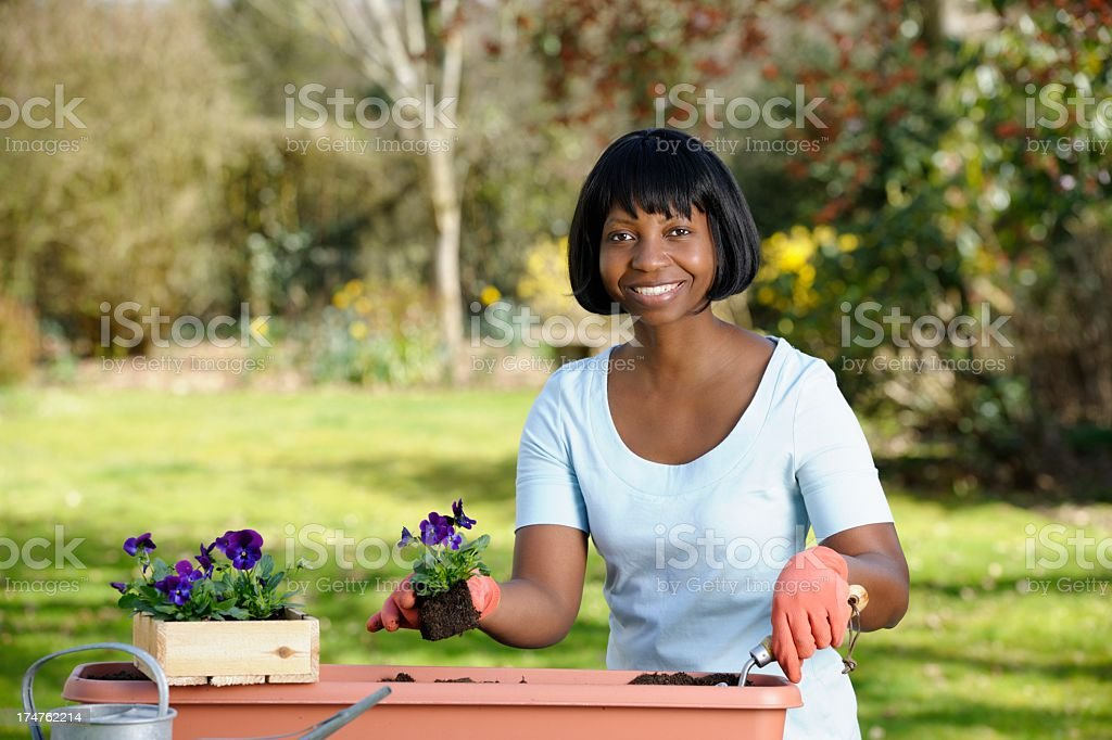 Happy African American Woman Planting Flowers a Planter royalty-free stock photo