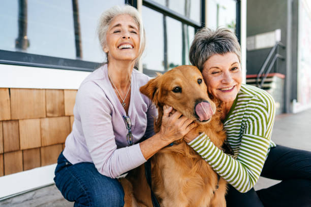 Happy and healthy life of dog owners stock photo
