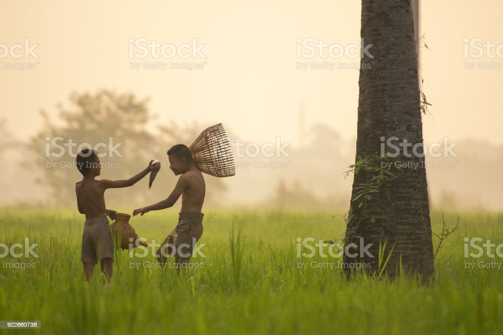 Happy asian boy friend on rice green field during morning time stock photo