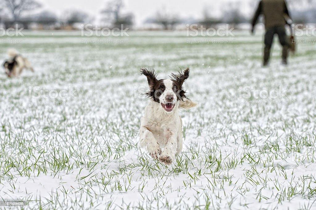 Happy at work stock photo