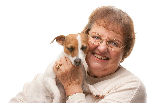 Happy attractive senior woman with jack russell terrier picture id92949872?b=1&k=6&m=92949872&s=612x612&w=0&h=b6r tj5 th3ibltklckvufpzdre4i6jydp5a3xn psq=