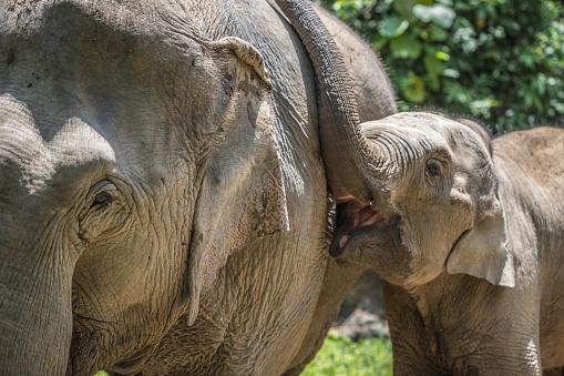 Happy Baby Olifant Stockfoto en meer beelden van Buitenopname