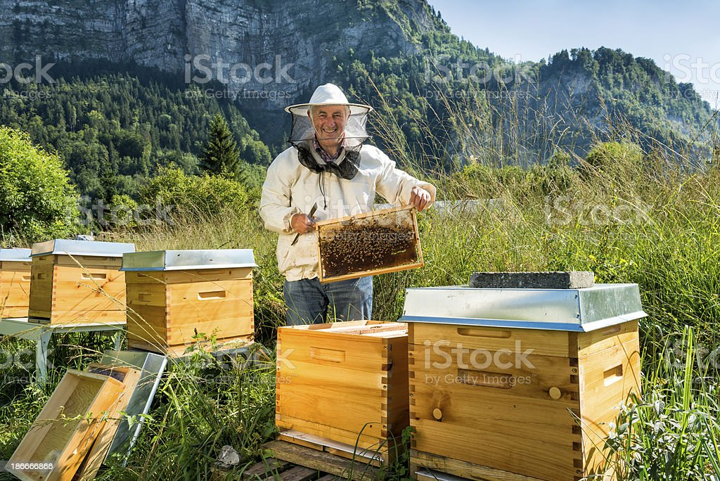 happy beekeeper with honeycomb stock photo