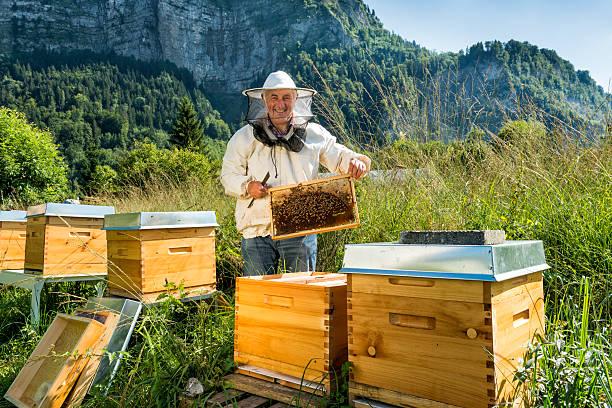 Lustige Bienen - Bilder und Stockfotos - iStock