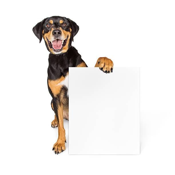happy big dog carrying blank sign - hundeplätze stock-fotos und bilder