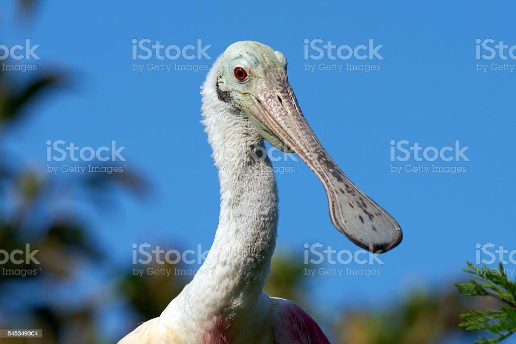 Happy Bird stock photo