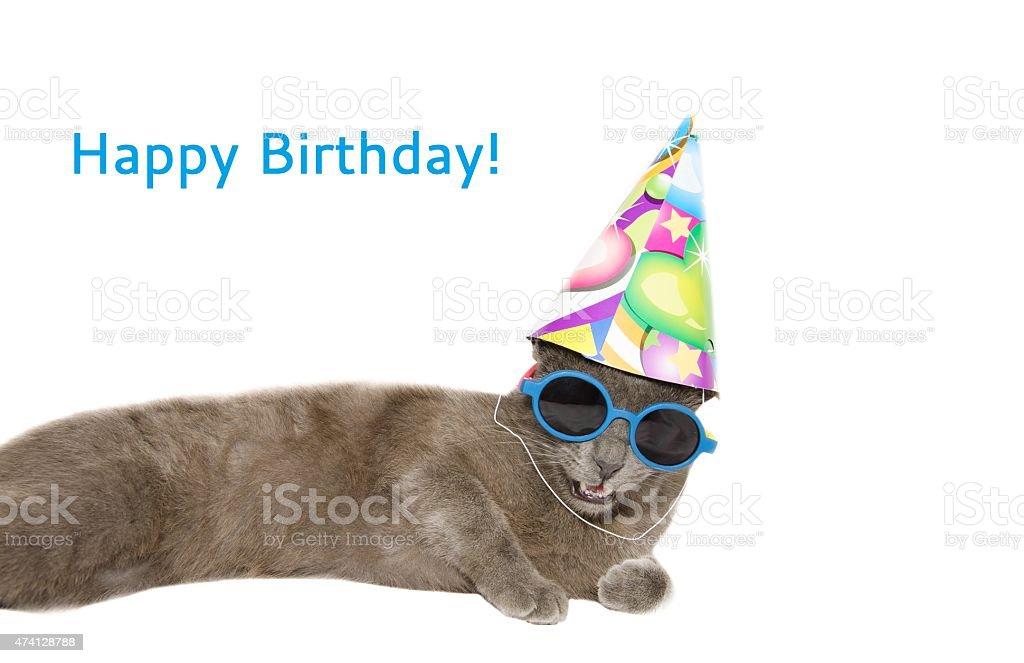 Animal Hat Purebred Dog Sunglasses 2015 Happy Birthday Card With Cat