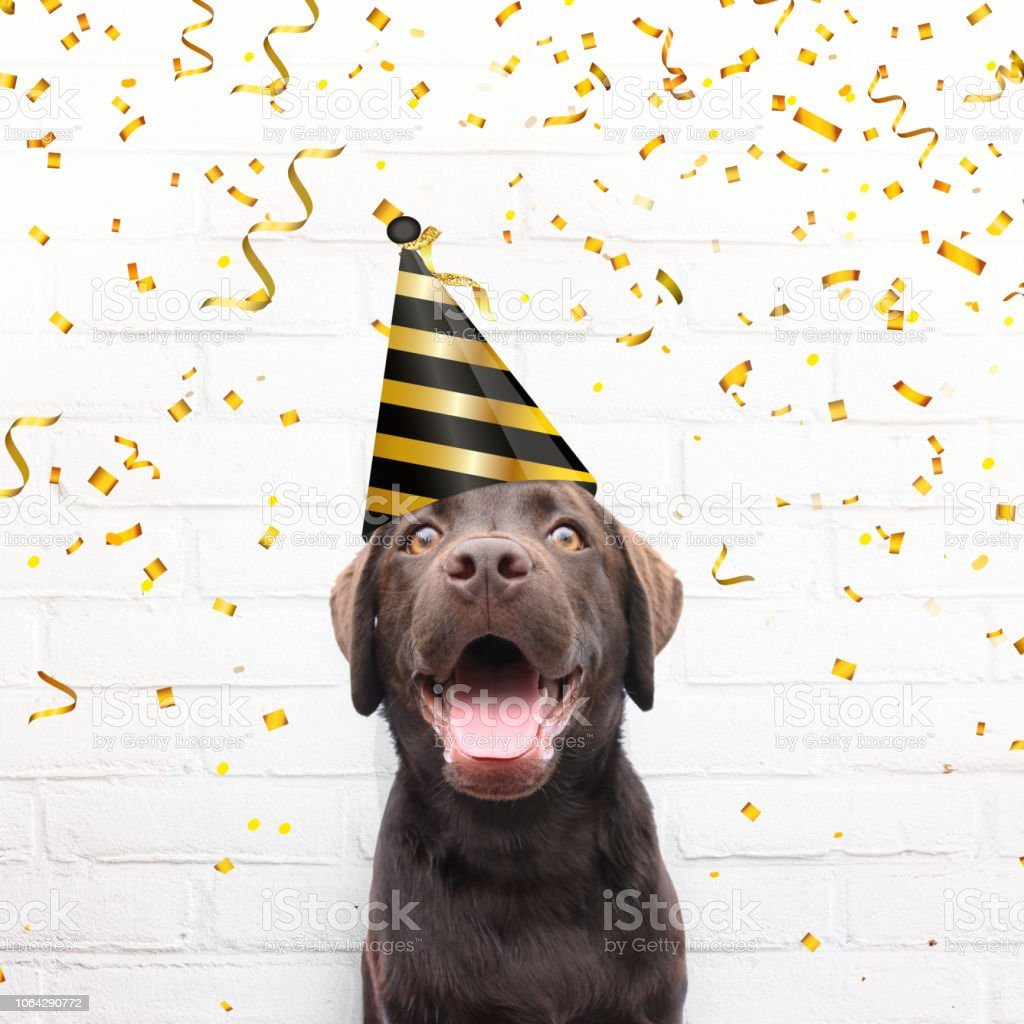 Happy Birthday Crazy Dog With Party Hat Is Smiling In De Camera Golden Confetti