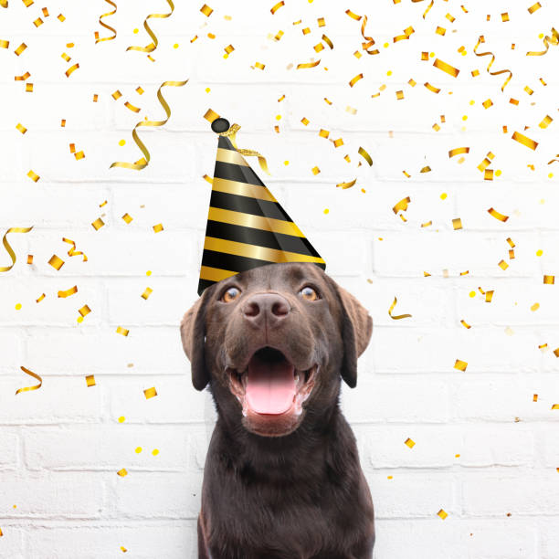 Happy birthday crazy happy dog with party hat is smiling in de camera with golden party confetti stock photo
