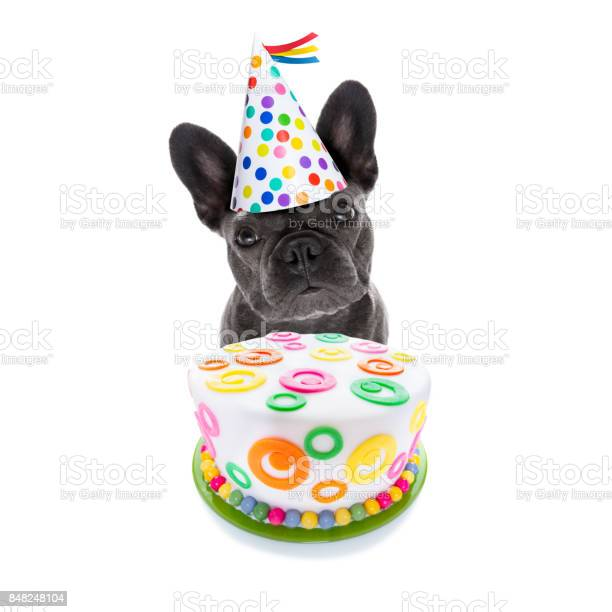 Happy birthday dog and cake picture id848248104?b=1&k=6&m=848248104&s=612x612&h=v2xiwgwcfjajpkf 2x7bokjdxjhgbaphcwd mwsqdow=