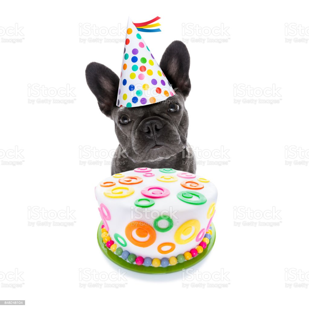 happy birthday dog and cake stock photo