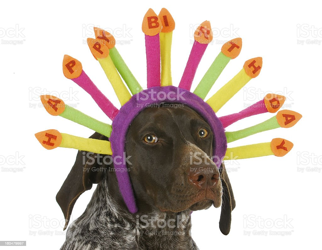 happy birthday dog royalty-free stock photo