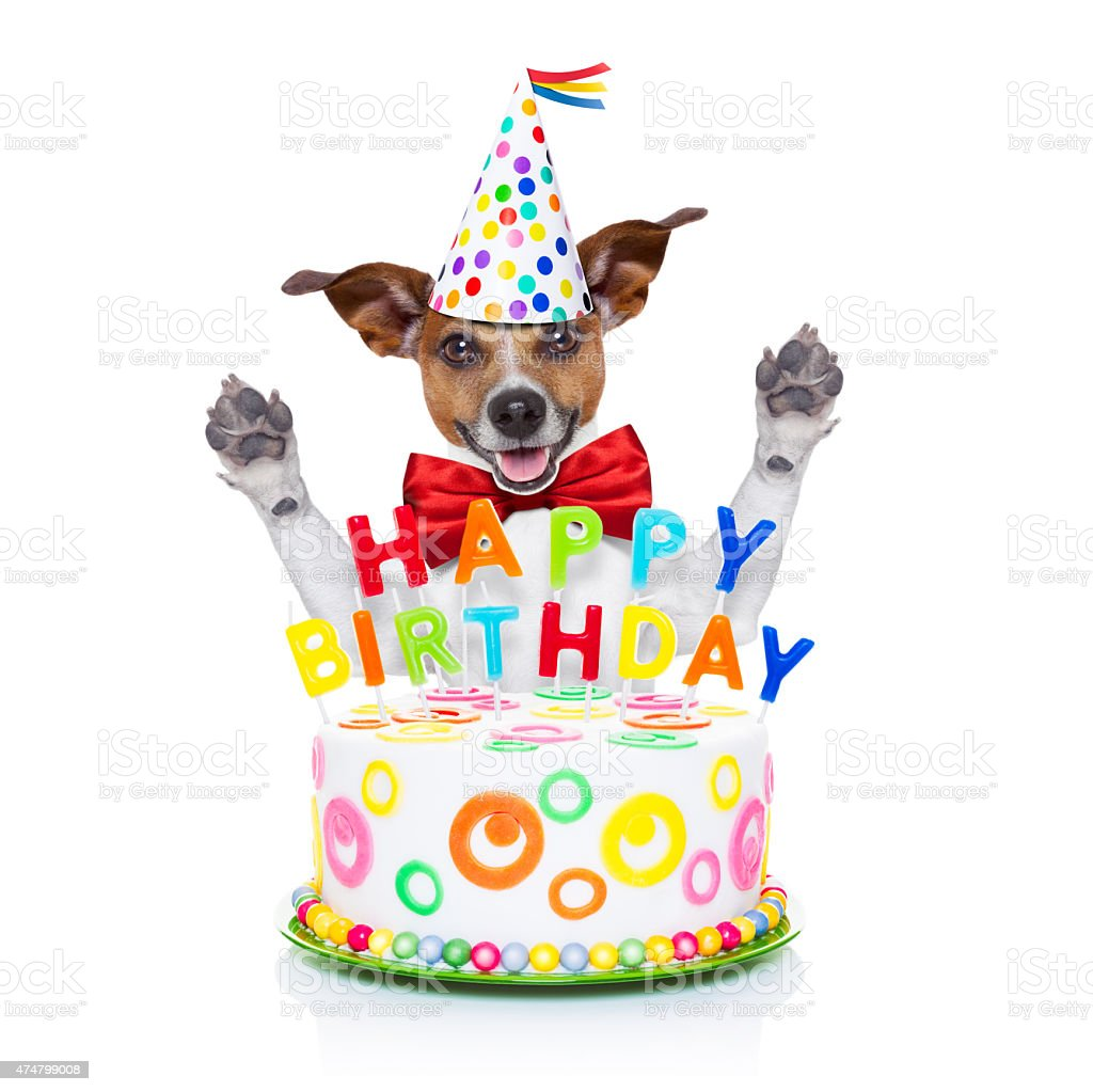 Happy Birthday Dog Stock Photo More Pictures Of 2015
