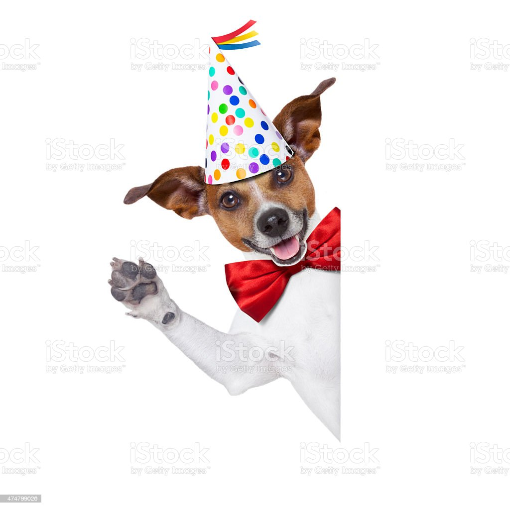Happy Birthday Dog Stock Photo & More Pictures of 2015 ... - photo#41